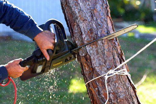 taglio alberi 2